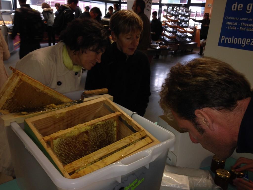 Dégustation et découverte de la ruche